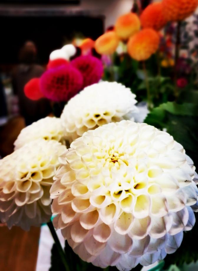 Blooms, floral, floristry, plants, show,