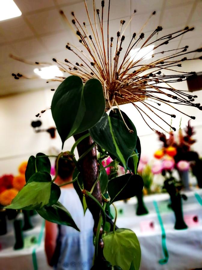 Flowers, arrangements, floral, plants, best in show,
