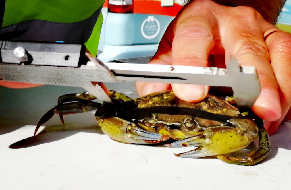 Crabbing, Community Group, Events, Appledore, North Devon