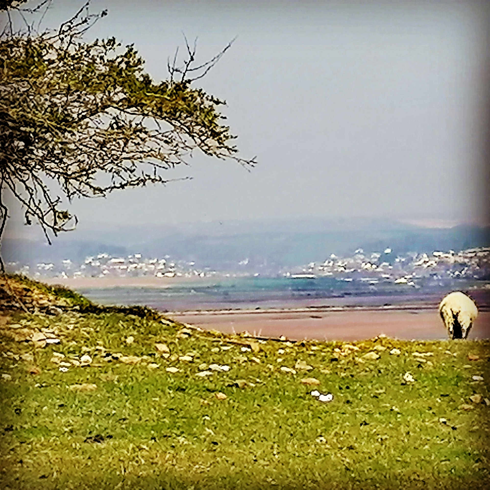 sheep, coastline, crags, estuaries, sea views,